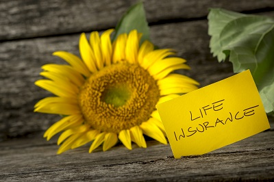 image of sun flower with life insurance sign